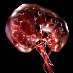 Seeing the Invisible: Inside the Human Body - 7pm, Monday 25th February 2013