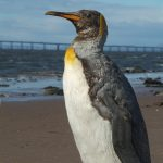 Summer Special: A Tale Of Two Penguins - Wednesday 6th August 2014, 7pm